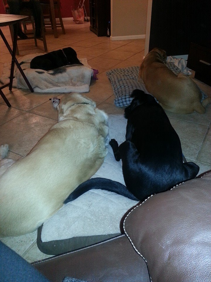 Gus, Weezie, Remy & Gracie Girl. Four of the best dogs in the whole wide world.